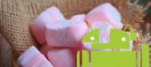 Marshmallow malvavisco
