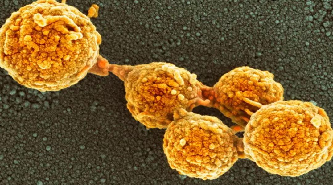 Vida artificial creada en laboratorio puede crecer y dividirse como las bacterias naturales
